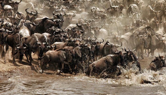 migration-safari.jpg